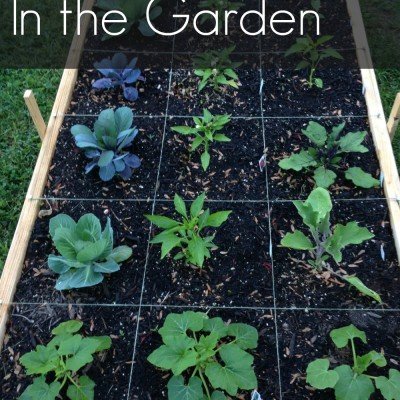 Goals for 2016: In the Garden