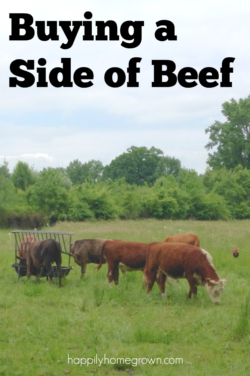 buying a side of beef