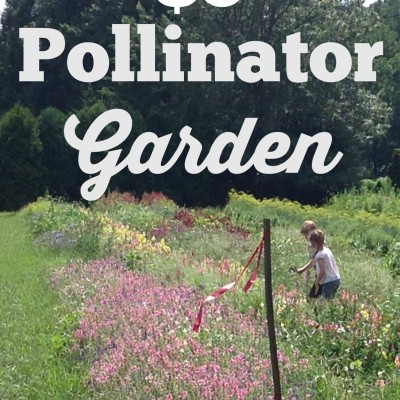 $3 Pollinator Garden