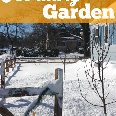 February in the Garden: Planning for Spring