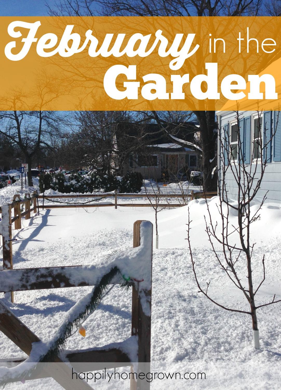 february in the garden
