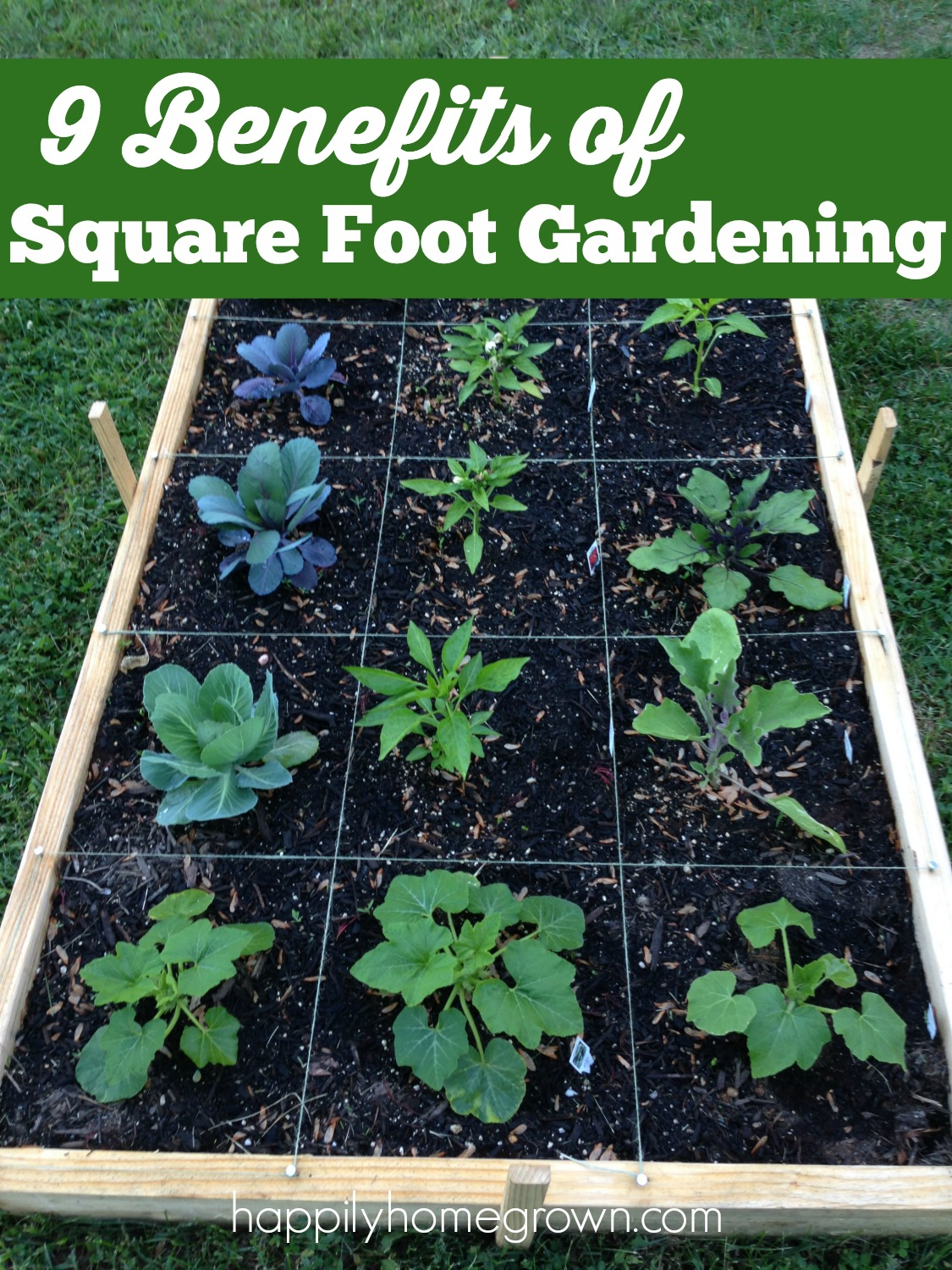 The goal with Square Foot Gardening and container gardening is to work smarter, not harder. Here are 9 of the benefits to Square Foot Gardening.