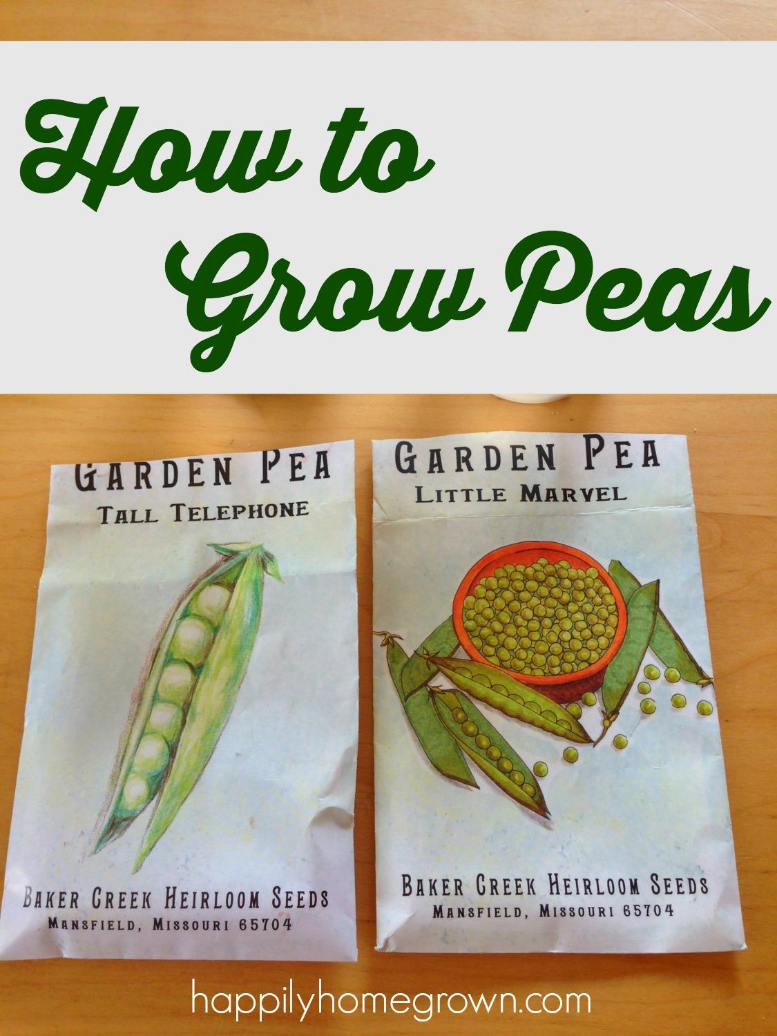 Peas are one of the earliest spring vegetables. They are easy to grow, and now is the perfect time to get them in the ground!