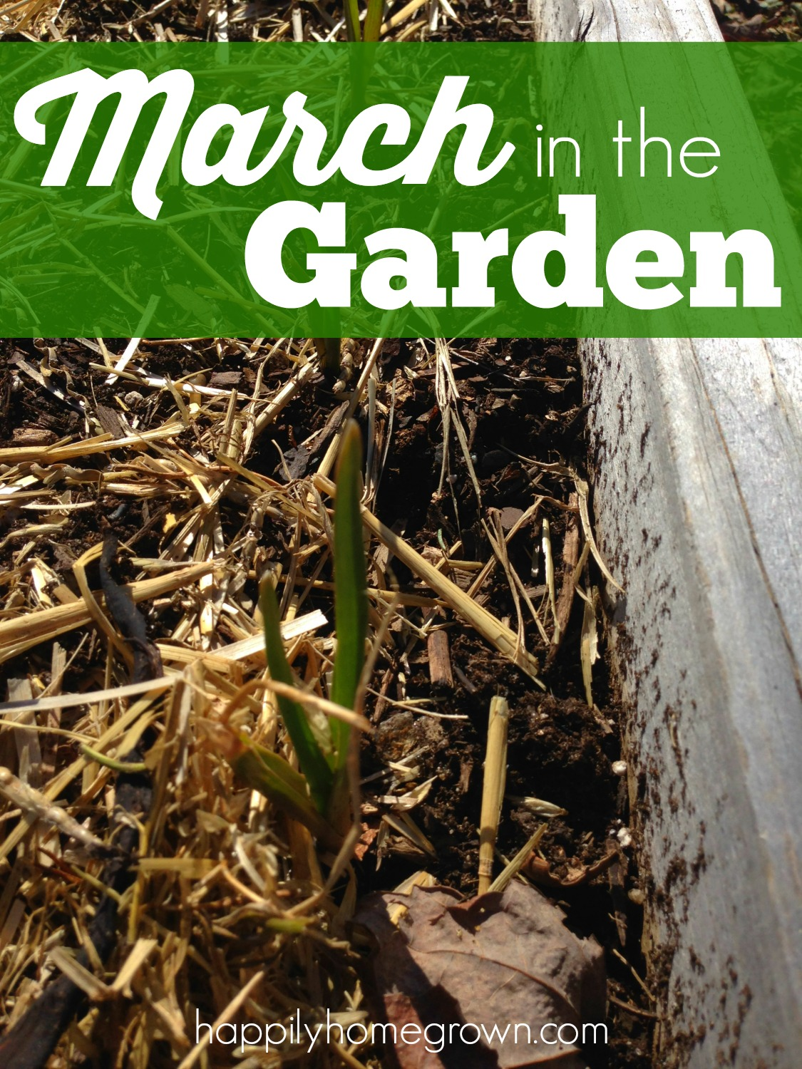 March in the Garden is a busy time. Beds need to be prepped, seeds started, trees pruned, and there is even stuff you can plant directly in the ground!