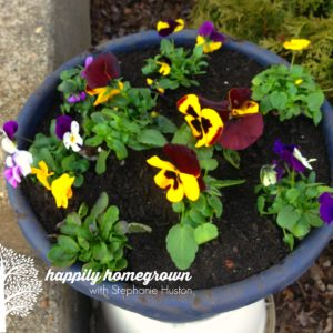 Even though its March, the warm weather has me in my garden. Some flowers and many vegetables can handle the cooler temps & even a frost.