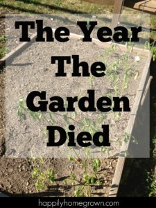 The year the garden died we had many consecutive days over 90, drought, family travel, and ultimately indifference. It was the perfect storm that resulted in our worst season ever.