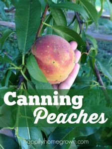 Canning peaches means capturing the summer sun in a jar to enjoy on the coldest winter day. Home canned peaches are not only delicious, but they are easy to prepare.