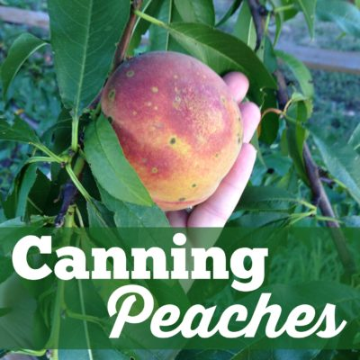 Canning Peaches: Summer In A Jar