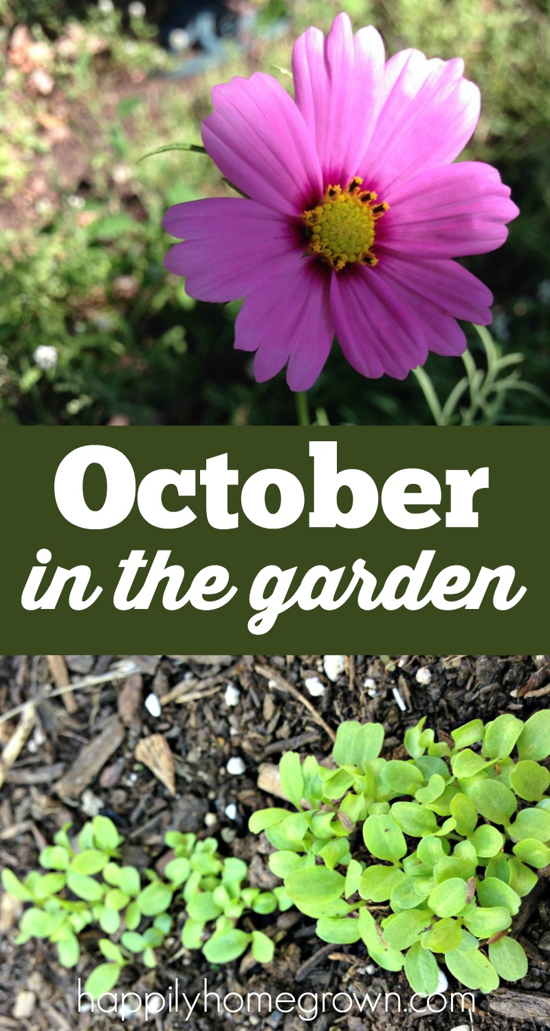 Now that autumn has arrived, the garden has new life! Come see what October is like in our garden, and take a peak of what we will see in the spring.
