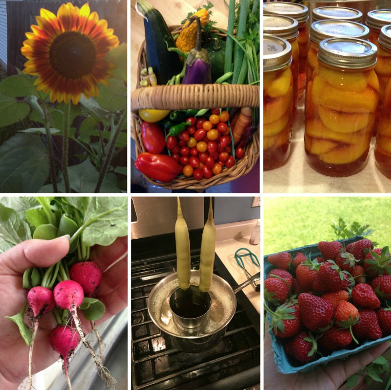 Homesteading Goals for 2017. Through gardening, food preservation, and a lot of DIY we are teaching our children to be self-reliant and we are working together as a family to have the things we need.