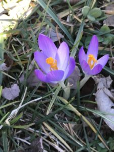 Signs of Spring in the Middle of February