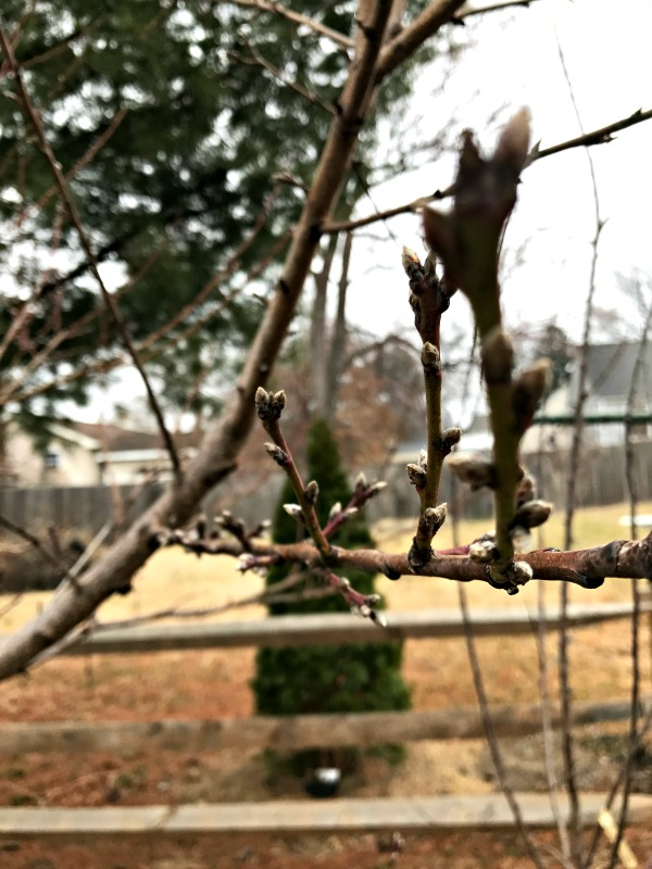 There are signs of spring all around us, even if it is the middle of February!  From the warm air and sunshine, to the first flowers already in bloom!