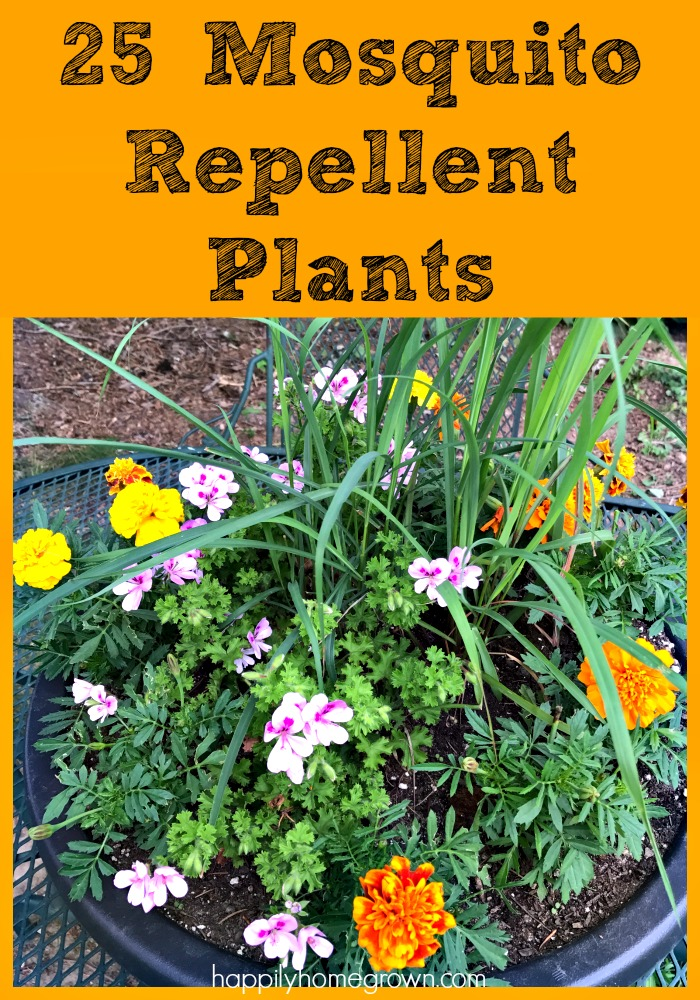 Want to keep mosquitoes and gnats from bugging you this summer? Here are 25 Mosquito Repellent Plants and tips for creating your own planter to keep the bugs away and have things look beautiful at the same time.