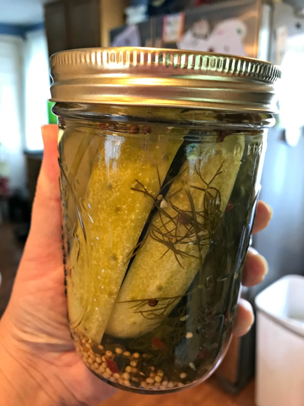 From the garden to the pantry all in a single afternoon.  Dill pickle spears are our family's favorite way to preserve the cucumbers we grow each summer.  After a 5lb harvest this weekend, it was time to break our the canning kettle and put up some pickles!