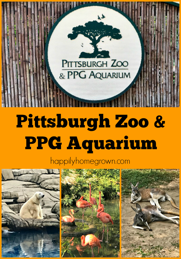 Join us as we take our homeschool on the road to the Pittsburgh Zoo & PPG Aquarium for a beautiful family day at the zoo.