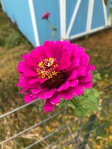 November's Garden in Pictures