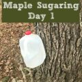 Day 1 of our backyard maple sugaring adventure.