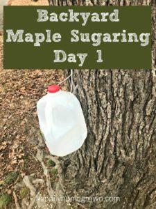 Backyard Maple Sugaring: Day 1