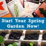 You can get a jump on your spring and summer garden by starting your seeds indoors in February.  Garden centers, as well as Home Depot and Lowes, are already well stocked with seed starting supplies and tons of fruit, vegetable, herb, and flower seeds.