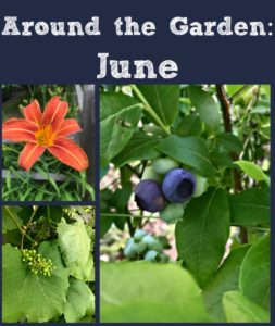 Around the Garden: June