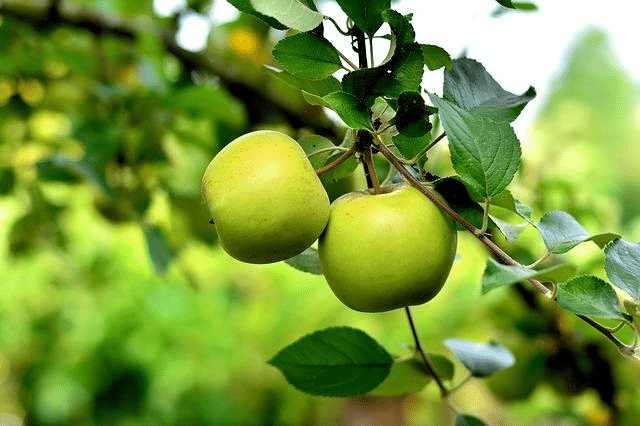 Selecting fruit trees can be a daunting task but it doesn't have to be. Here are five things to consider to make your choices easier.