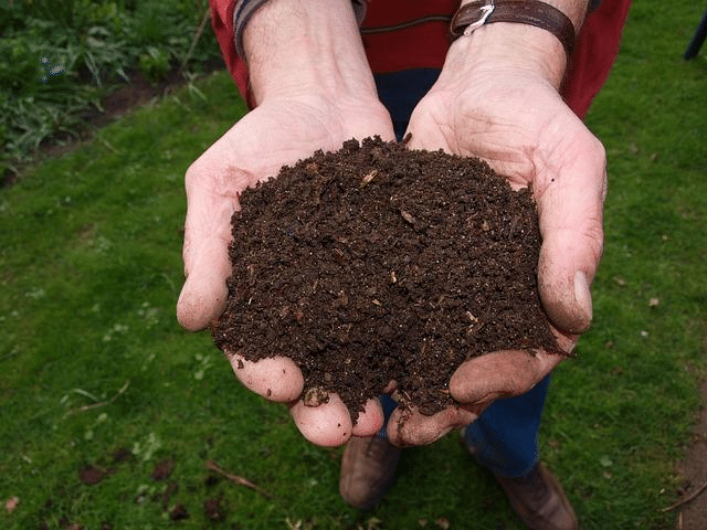 Not all tea bags are created equal and for those people who are trying to go plastic-free, it may be time to re-evaluate what's in your cup of tea and ultimately your compost pile.