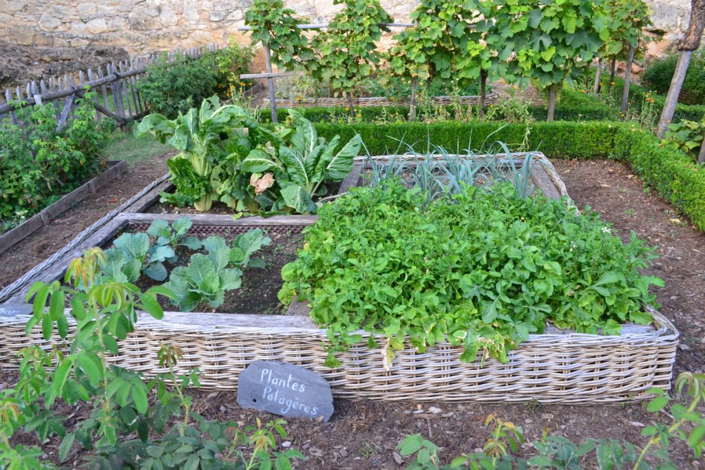 raised bed square foot garden gardening in small spaces